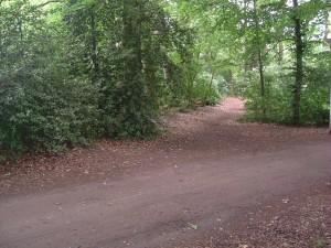 Rondemaatweg bij oude bos