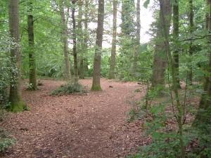 In het oude bos